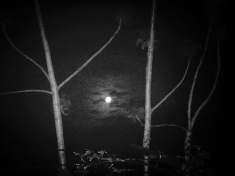 KCe Blackandwhite Goodnight Moon Darkscape