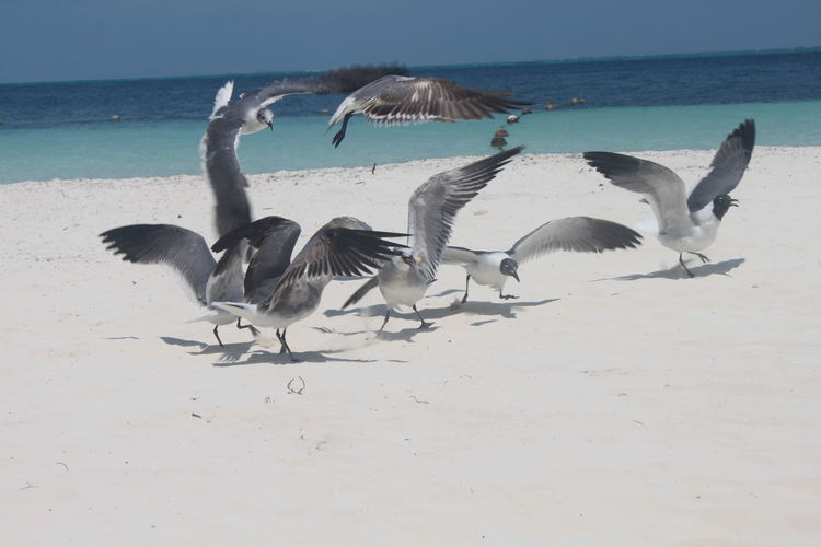 Birds on beach against sky
