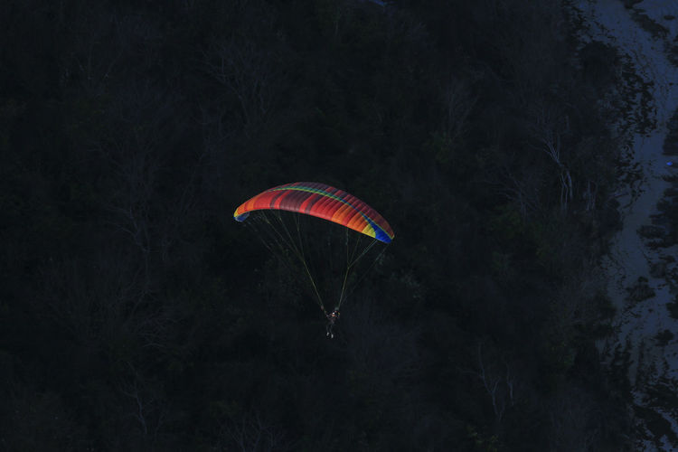 Low angle view of kite flying in forest