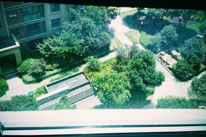楼下 窗外 夏天 宁静