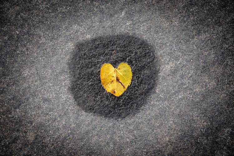 High angle view of heart shape on leaf