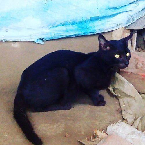Black cat 🐈🐱 Instacat Instapussy Tumblrposts Instacapture Petcat Animallovers .
