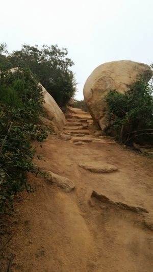 Hiking Potato chip Tree Nature Environmental Conservation No People Wilderness Landscape Outdoors Sky Sand Dune Living Organism Day