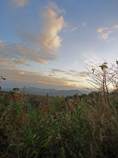 Sunset Flower Nature Plant Beauty In Nature Travel Travel Destinations Tourism Growth Mountain Outdoors Scenics Wildflower Sea Fragility No People Sky Day Costa Rica❤ Flower Head Growth Water