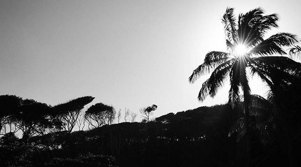 Photo Fotografia Foto Photographer Photograph Blackandwhite Pretoebranco Instaphoto Instalike Brasildosmeusolhos_ Ig_paraiba_ Fimdetarde Natureza Nature Paraíba Brazil Tambaba