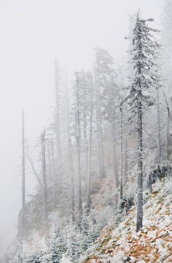 Frozen trees on mountain during foggy weather