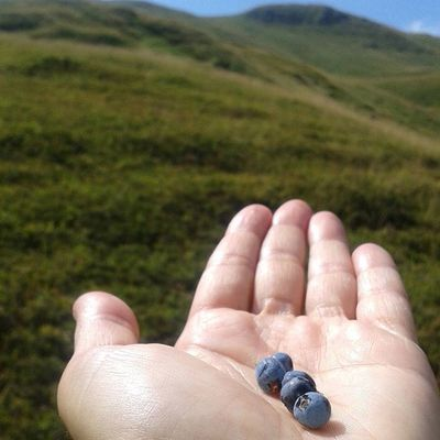 Mirtilli Blueberries Montagna Montagna Lagoscaffaiolo Igersbologna Hand Mano Myhand Igersemiliaromagna Blue Sunnyday Sole Sun Ritorniamoalfuturo