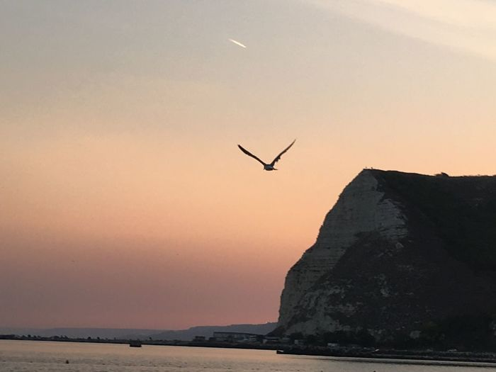 Fly of Sunset Blackseacoast Seaside Seavibe Blacksea Summertime Colour Of Life Colour Of Life
