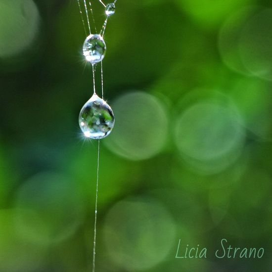 Uno Swarovski in giardino. Macro Photography Be. Ready. Green Color Nature Freshness Hanging Close-up No People Backgrounds Day Indoors  Fragility Drop Water Drop Spider Web RainDrop Refraction Web Rainy Season Arachnid Droplet