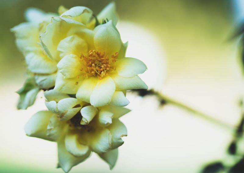 Yellow bloom Flowering Plant Flower Plant Beauty In Nature Growth Fragility Freshness Petal Yellow