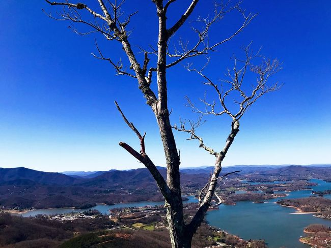 Nature Tranquility Mountain Bare Tree Beauty In Nature Branch Blue Scenics Landscape No People Mountain Range Tree Tranquil Scene Clear Sky Outdoors