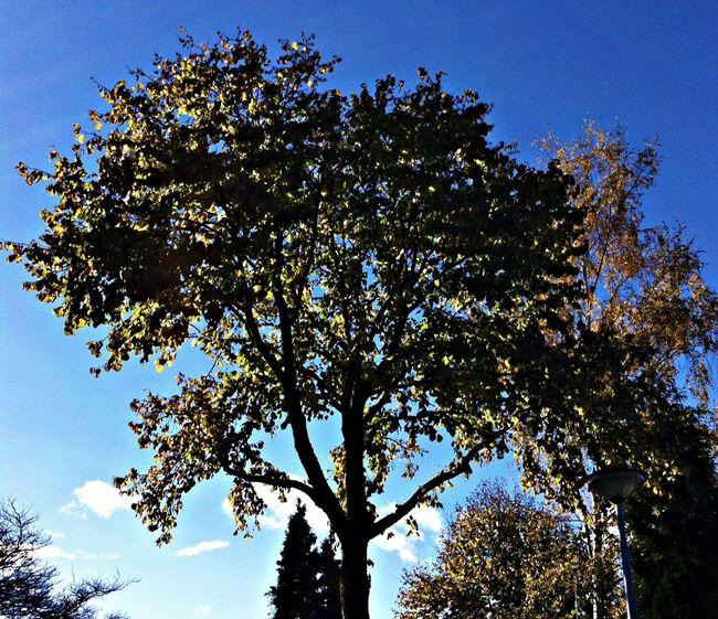 Heerlijk helder wandel weer. Renkum Trees Clouds And Sky