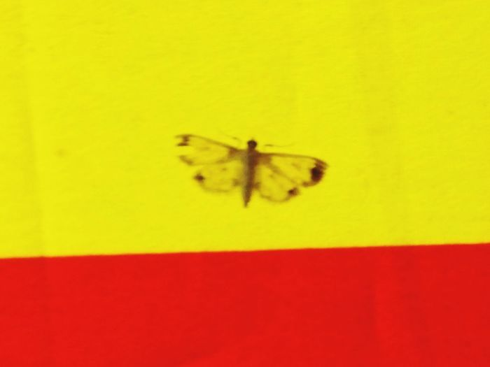 Yellow One Animal Insect No People Colored Background Animal Wing Orange Color Butterfly Red Color Is Powerfull