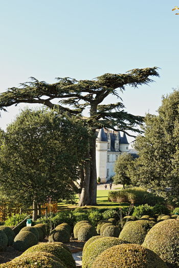 Castle France Loire Loire Valley Lost In The Landscape Architecture Beauty In Nature Green Color Nature Tree