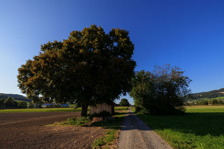 Road amidst trees on field against clear blue sky