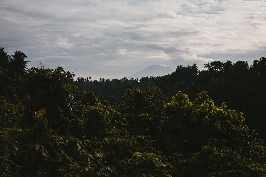 holy Gunung Agung volcano as seen from the Campuhan Ridge during the eruptions early 2018. Bali Copy Space Dramatic Sky Green Color Mount Agung Wanderlust Active Volcano Beauty In Nature Cloud - Sky Environment Forest Green Color Growth Idyllic Jungle Landscape Lush Foliage Mountain No People Non-urban Scene Outdoors Overcast Sky Tranquil Scene Tranquility