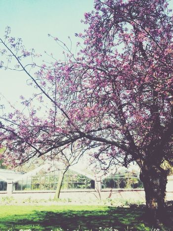 🌸🌸🌸 Hello World Taking Photos Check This Out Hi! Relaxing Treee Nature Love Colors
