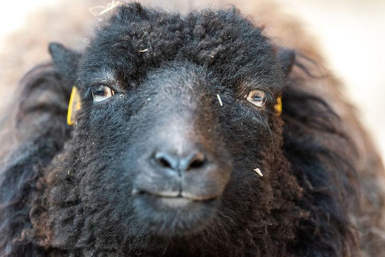 Close-up portrait of a animal