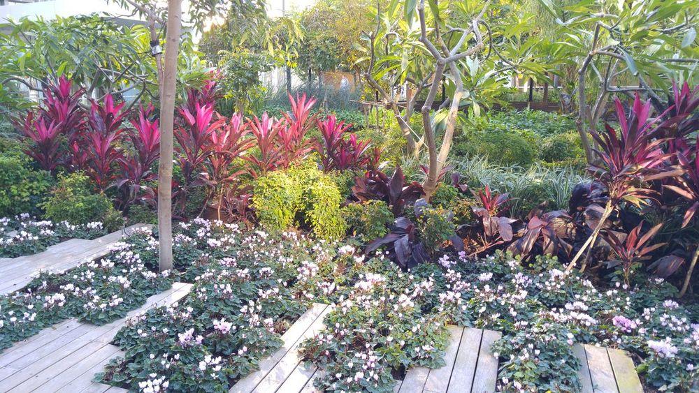 Botany Flower Garden Growing Plant Sun Rays Winter Work Environment