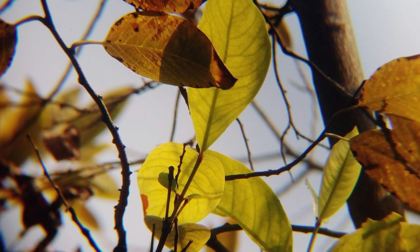Old leaves &