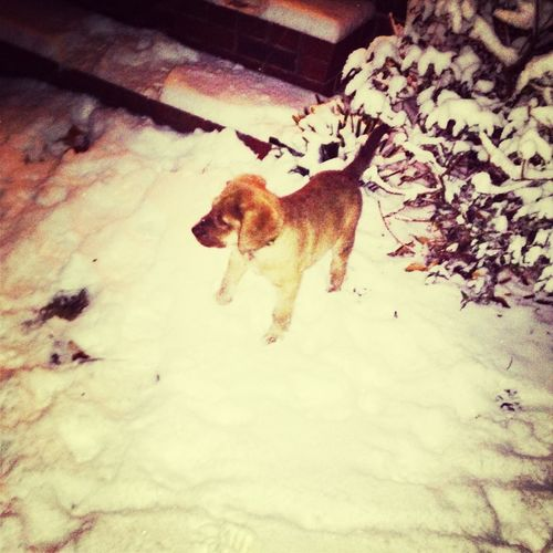 Snow Time :)