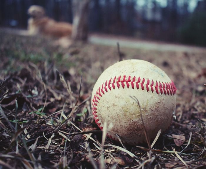 Baseball Playtime Outdoors Childsplay Outside Summer Time  Catch Ball Childhood Mans Best Friend Friendship Dog Domestic Animals Pets No People Day Outdoor Boys Life Outside Sports