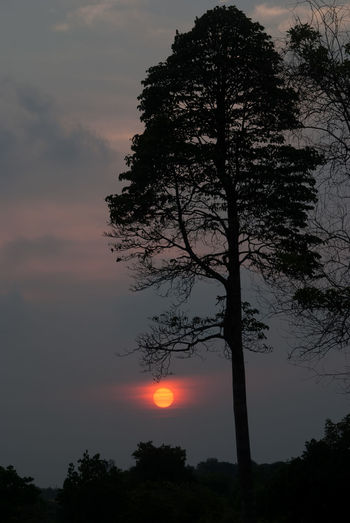 Low angle view of silhouette tree against sky during sunset