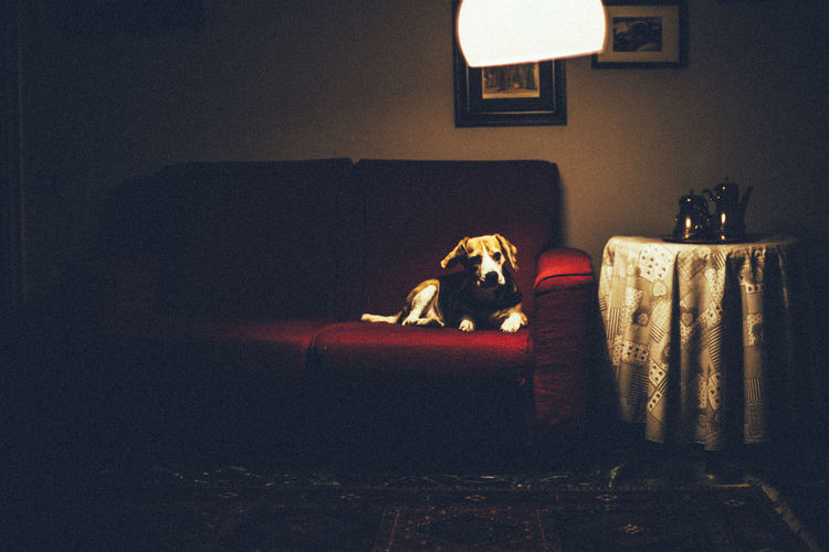 Animal Day Dog Dogs Domestic Animals Indoors  Light Light And Shadow Nature No People