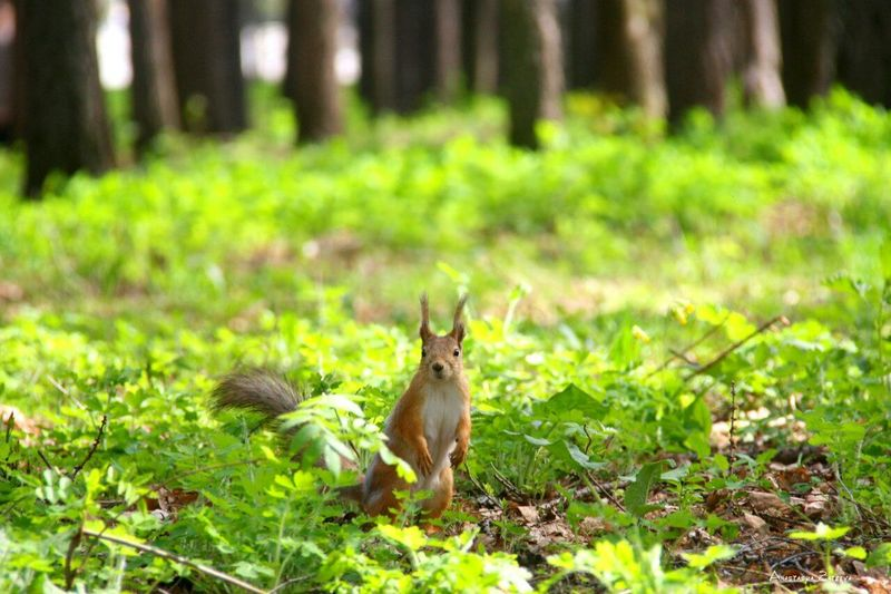Photography on the squirrel Imphotography Squirrel Grest Day Park The Victory Engoying Life