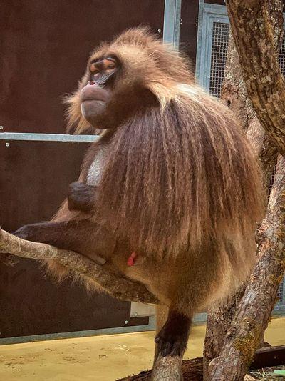 Monkey Primate