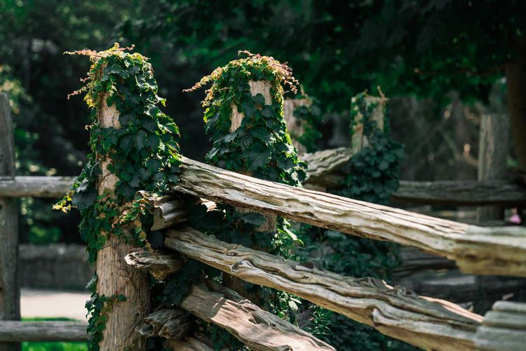 Close-up of plants growing on wooden fence in forest