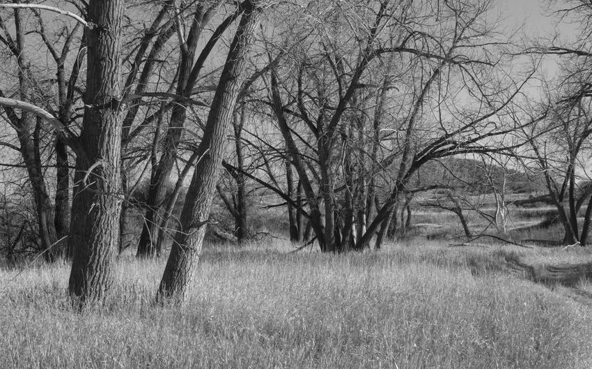 Landscapes - Late Afternoon Light #1 Bear Creek Regional Park Trees \Colorado B&w Bare Tree Beauty In Nature Beauty In Nature Black And White Colorado Springs Day Fall 2017 Grass Landscape Nature No People Outdoors Tranquility Tree