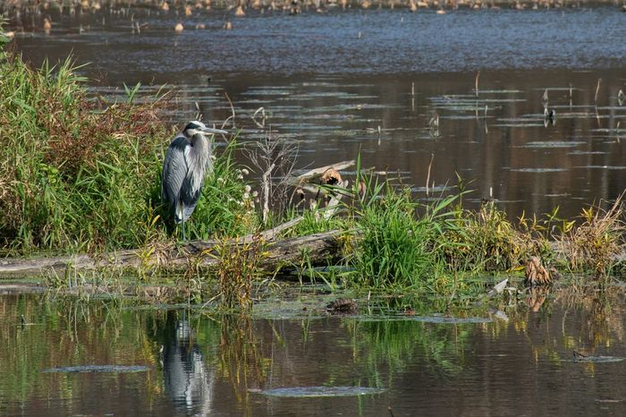 Nature Birds Photography Nikon