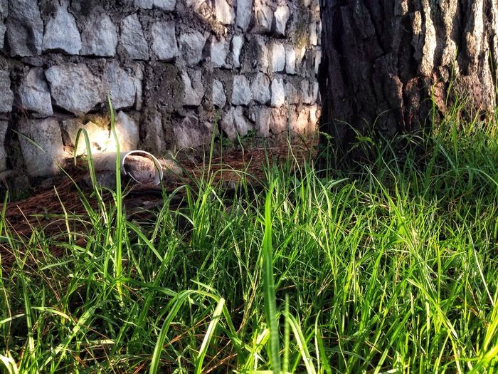 Morning light over grass. IPhoneography Ecuador Sangolquí Grass Green Green Green!  Green Nature Tree Stone Wall
