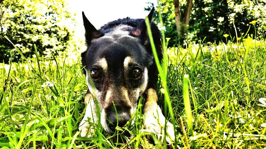 Lying On The Grass Walking With My Dog Animalphotography Dog Looking Dog Animals Gras  EyeEm Best Shots Eyes Eyes Watching You
