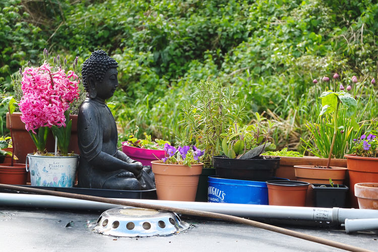 Beauty In Nature Boat Buddha Buddha Statue Canals And Waterways English Countryside EyeEmNewHere Kennet And Avon Canal Liveaboard Narrowboat Nature No People Plant Potted Plants Roof Garden Small Garden Waterways