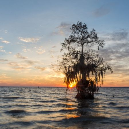 Tranquil Scene Lakeside Sunrise Louisiana Water DUCKS :)