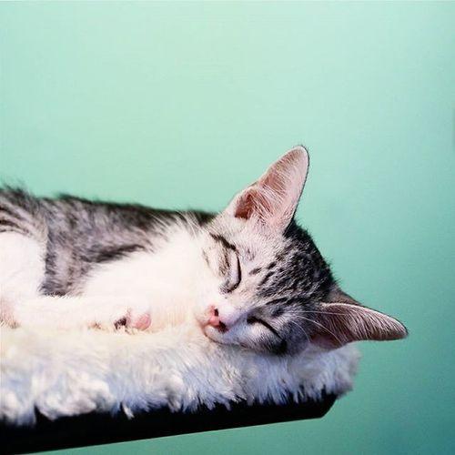 Tgif = Thank God It's Fluffy??? 😺😺 Catstagram