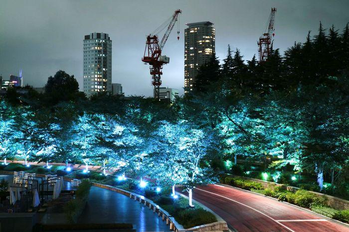 Street Trees Light Lighting Illumination Nightphotography Nightview Nightshot Nightscape Sky Cloud Tokyo Tokyomidtown Roppongi Japan