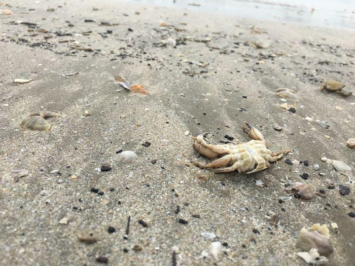 Animal Wildlife Animals In The Wild Sand Animal Beach Animal Themes Land Nature One Animal Outdoors Crab