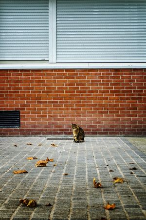 TakeoverContrast with street cat 🐈 Leaf Change Season  Falling Autumn Fallen Transportation Dry Day Paving Stone Domestic Animals Messy Unhygienic Leaves Outdoors Cat Catlovers Cats Of EyeEm Street Cat Pet Portraits