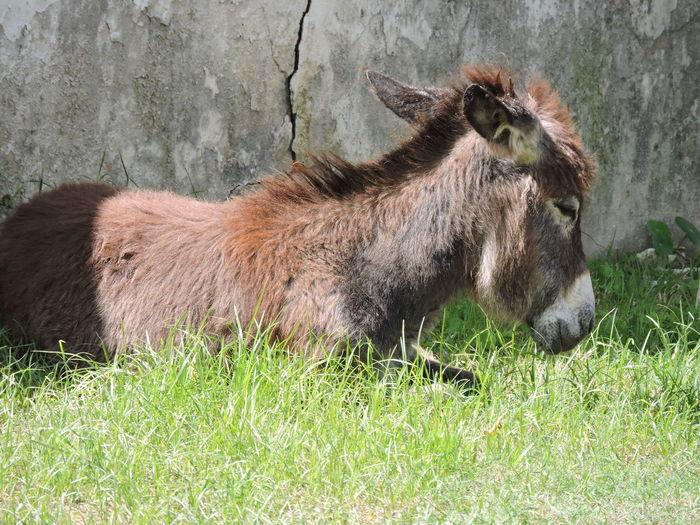 Cavalo Horse Potro Animal Themes Grass Close-up Grass Area