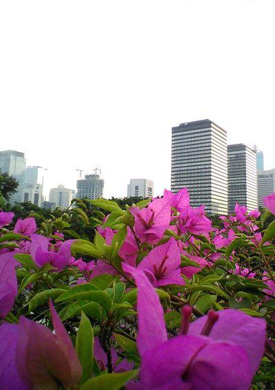 City Garden Flower And The City City Landscape Landscape_captures Landscape_photography Beatiful Day! City View  City Spot