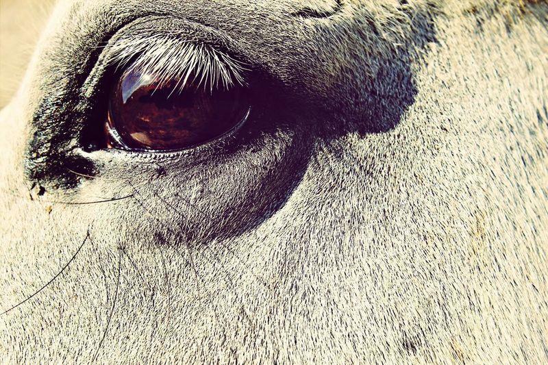 Eye Horse Horse