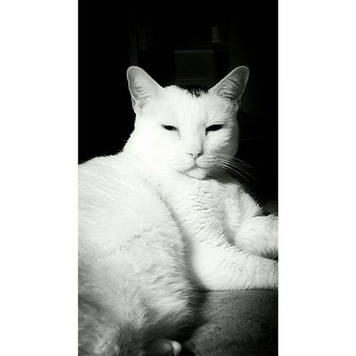 Catsofinstagram Whitecats Catlovers Check This Out Taking Photos Hello There ;) Have A Great Day Everyone!✨✨