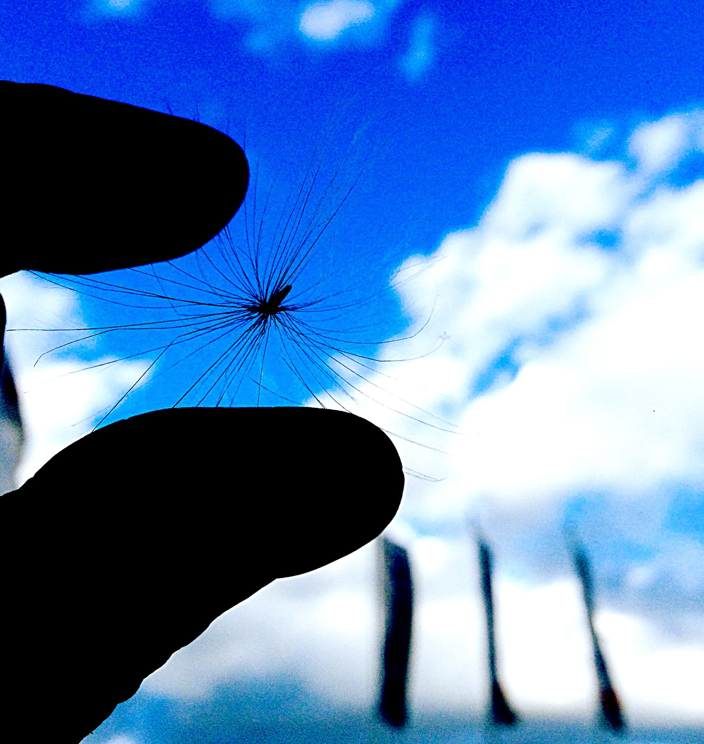 low angle view, sky, silhouette, blue, cloud - sky, cloud, insect, dusk, nature, close-up, outdoors, part of, no people, day, beauty in nature, auto post production filter, cloudy, wildlife, animal themes, person