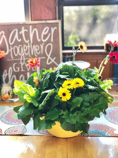 Give Thanks  Thanks  Kitchen Kitchen Table Text Flower Flowering Plant Plant Western Script Communication Freshness Green Color Window Potted Plant Sign