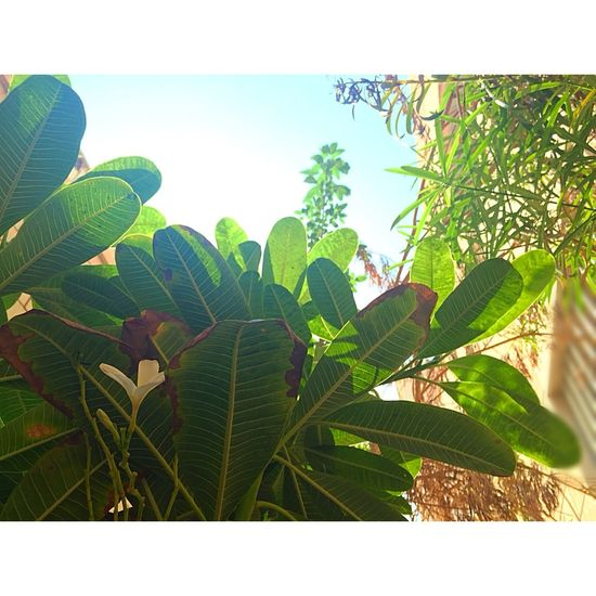 Sky And Trees Garden Photography Good_Weather EyeEem Best Shots- My World EyeEm Gallery Sky Kuwait Goodnight Eyeeem EyeEm Nature Lover Eyeeyeem Best Shots - Nature Flowers,Plants & Garden Eye4photography  EyeEyem Love It Green Iphoneonly By Me