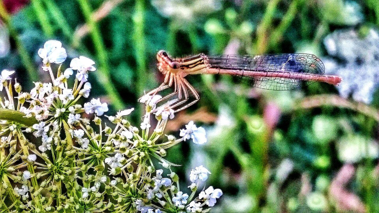 animals in the wild, animal themes, one animal, insect, day, no people, nature, focus on foreground, outdoors, animal wildlife, close-up, flower