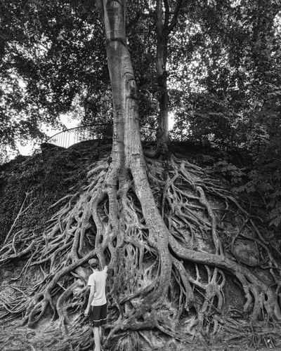 Low angle view of tree roots on field